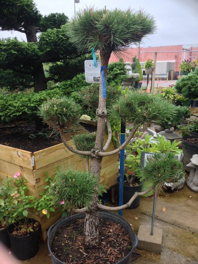 Photo Of Tea Garden Nursery Arlington Tx United States