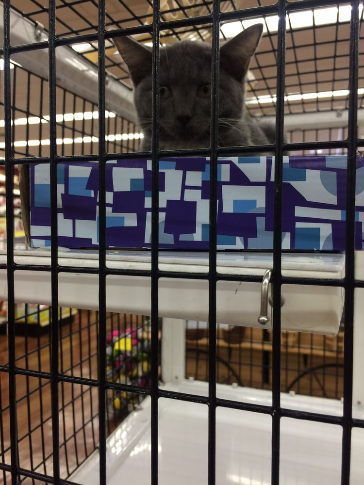 Pet Supermarket: 380 E Michigan St, Orlando, FL