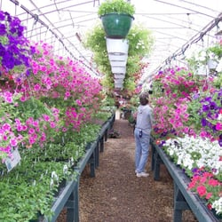 Photo Of Tilton Nursery Greenhouse Nh United States