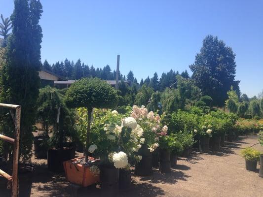 Lopez Nursery Vancouver Wa Thenurseries