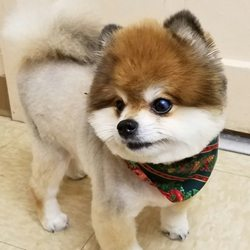 Dogs best friend 13 photos pet groomers 4415 w clearwater photo of dogs best friend kennewick wa united states cutie ready for solutioingenieria Gallery