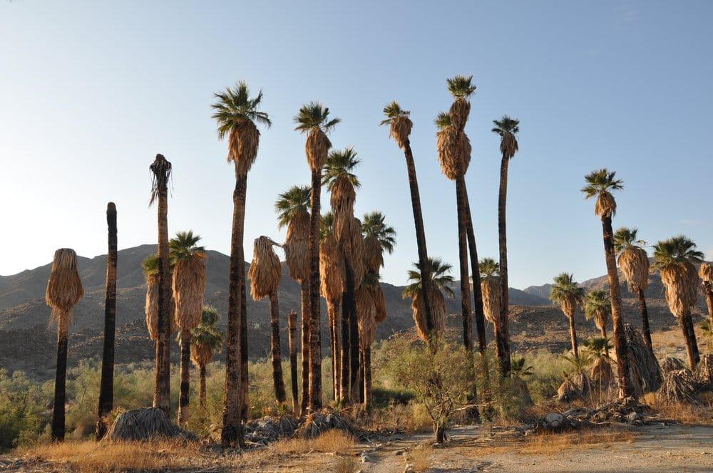Corn Springs Petroglyph Site: Interstate 10 & Corn Springs, Eagle Mountain, CA