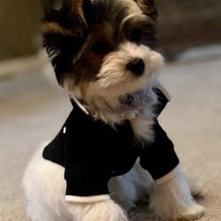 Posh Puppy Boutique 50 Photos 85 Reviews Pet Stores 6040