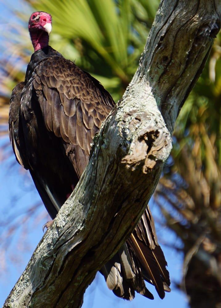 Orlando Wetlands Park: 25155 Wheeler Rd, Christmas, FL