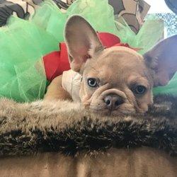 Yelp Reviews for Fido Park Avenue Dog Boutique - 22 Photos & 10