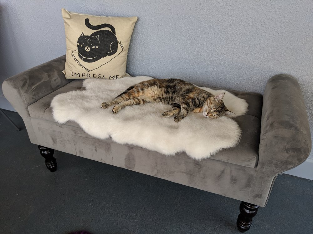 Caturday Cat Café & Lounge: 1211 W Central Ave, Brea, CA