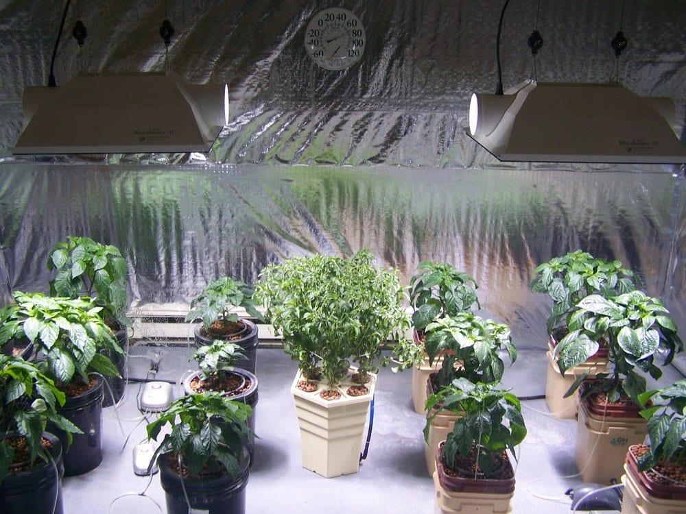 Green Solutions Hydroponics Center: 1700 Orange St, Berwick, PA