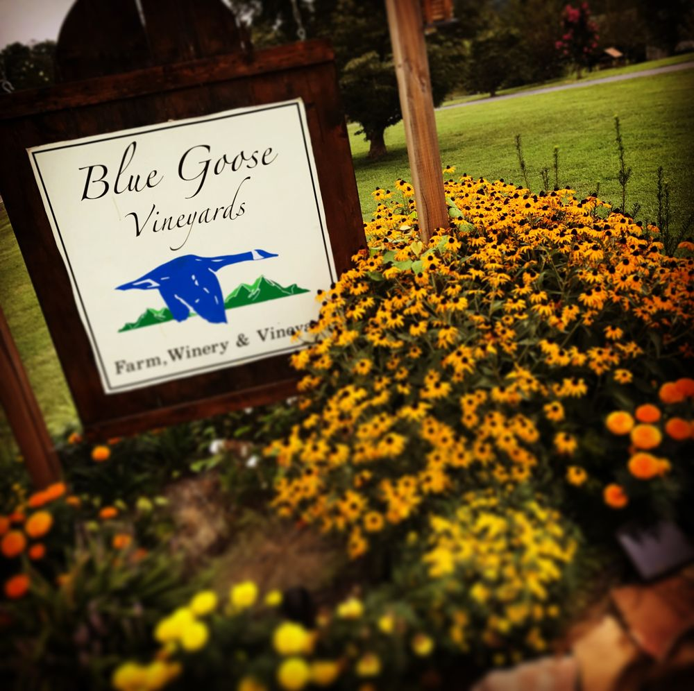 Blue Goose Vineyards: 3334 Old Niles Ferry Rd, Maryville, TN