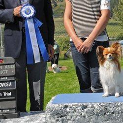 BernerGold - Pet Training - Mission, BC - Phone Number - Yelp