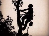 The Tree-Man Tree Service