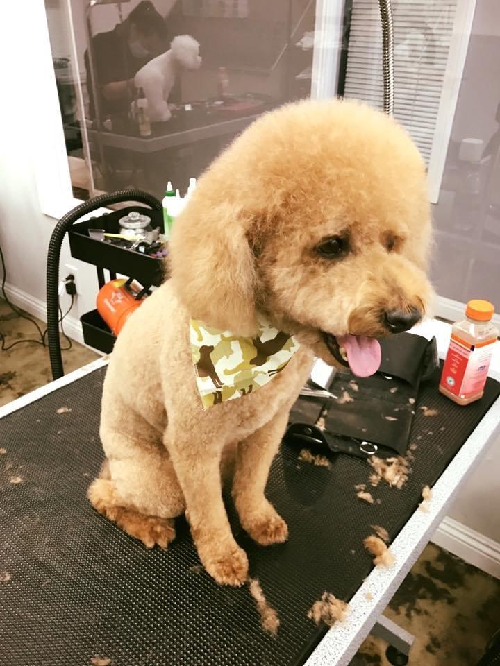 Ironmaya Pet Grooming