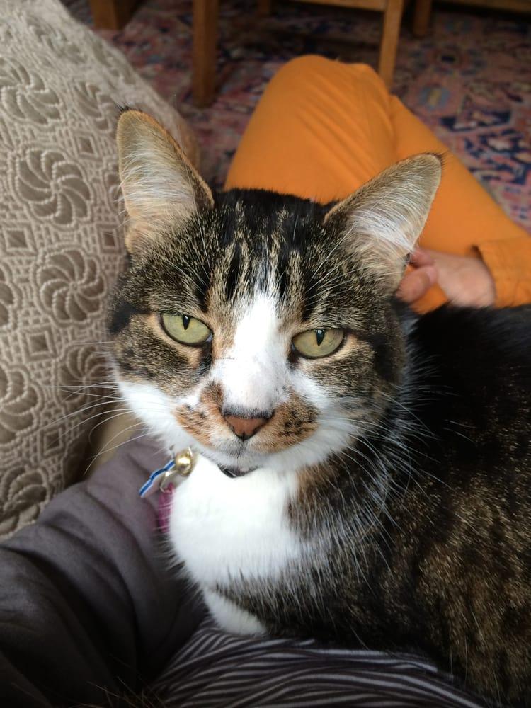Kitty Corner Cat Sitting: Oakland, CA
