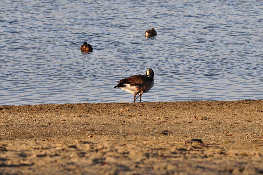 Lake Tye: 14090 Fryelands Blvd, Monroe, WA