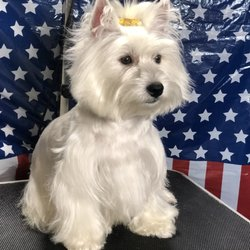 Dog Grooming Pet Andreia S Brazil Groomers Get Quote 22 Photos