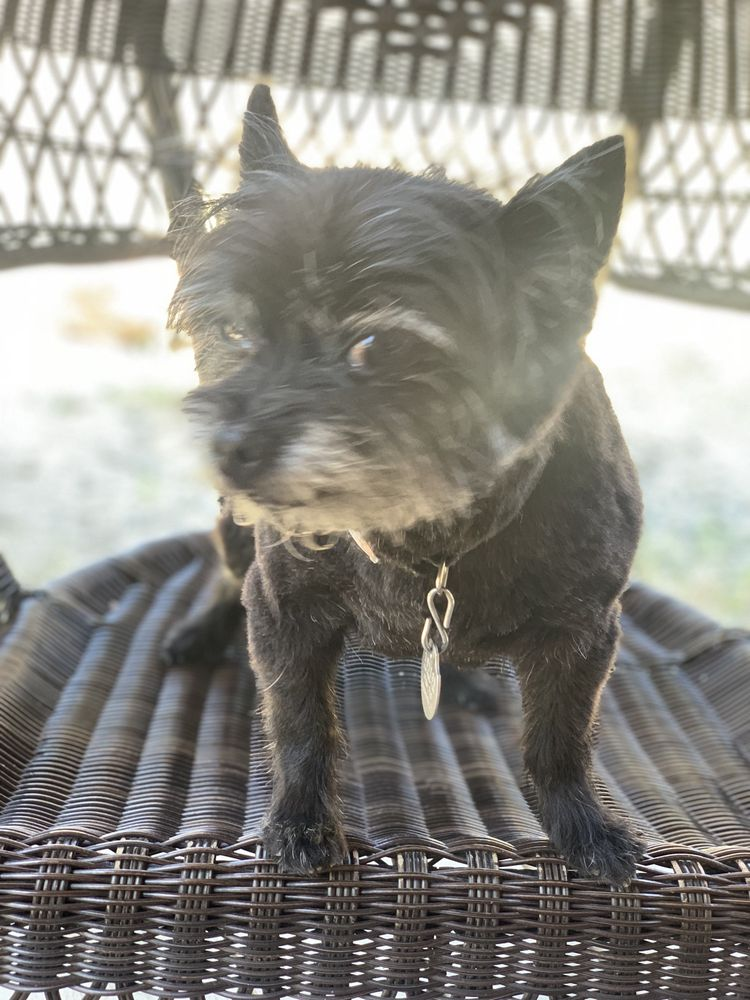 Bark Avenue Pet Salon: 14644 Lakeshore Dr, Clearlake, CA