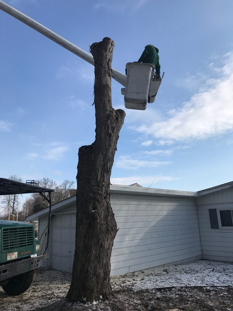 J & J Tree Trimming: 10380 Brookside Dr, Tecumseh, MI