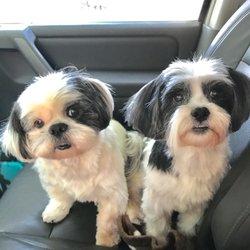 Shih Tzu and Precious Paws Rescue - Animal Shelters - 1111