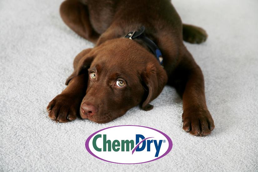 Pinnacle Chem-Dry: 6780 Brooklyn Rd, Jackson, MI