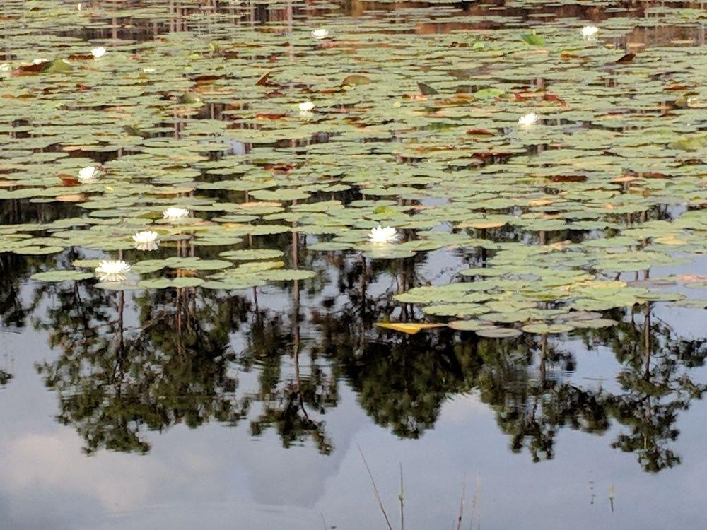 Patsy Pond Nature Trail: 3614 NC-24, Newport, NC