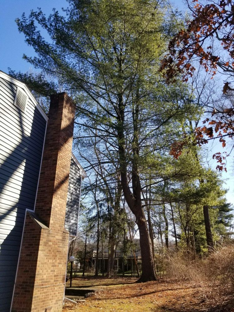 Redwood Tree & Landcare: New Providence, NJ