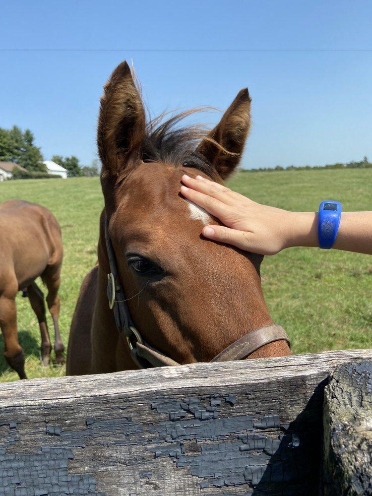 Thoroughbred Heritage Horse Farm Tours: Lexington, KY