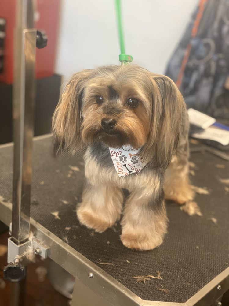 VIP Dog Grooming