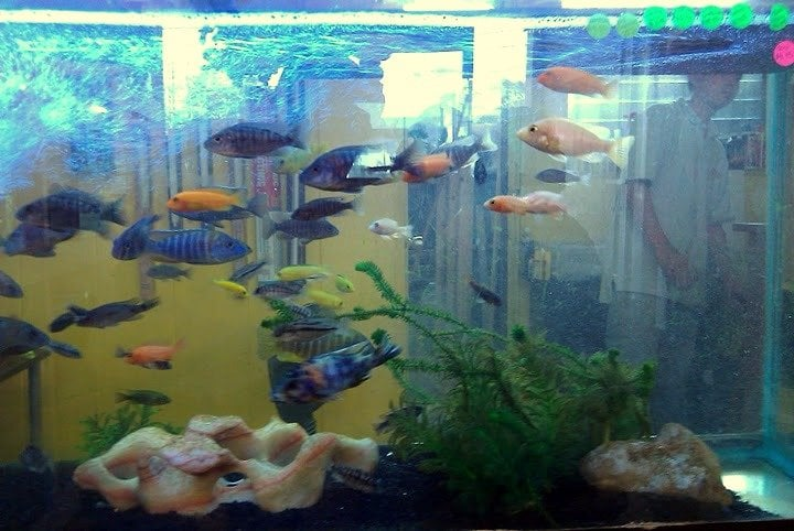 Liliha tropical fish supplies fechado pet shops for Fishing supplies honolulu