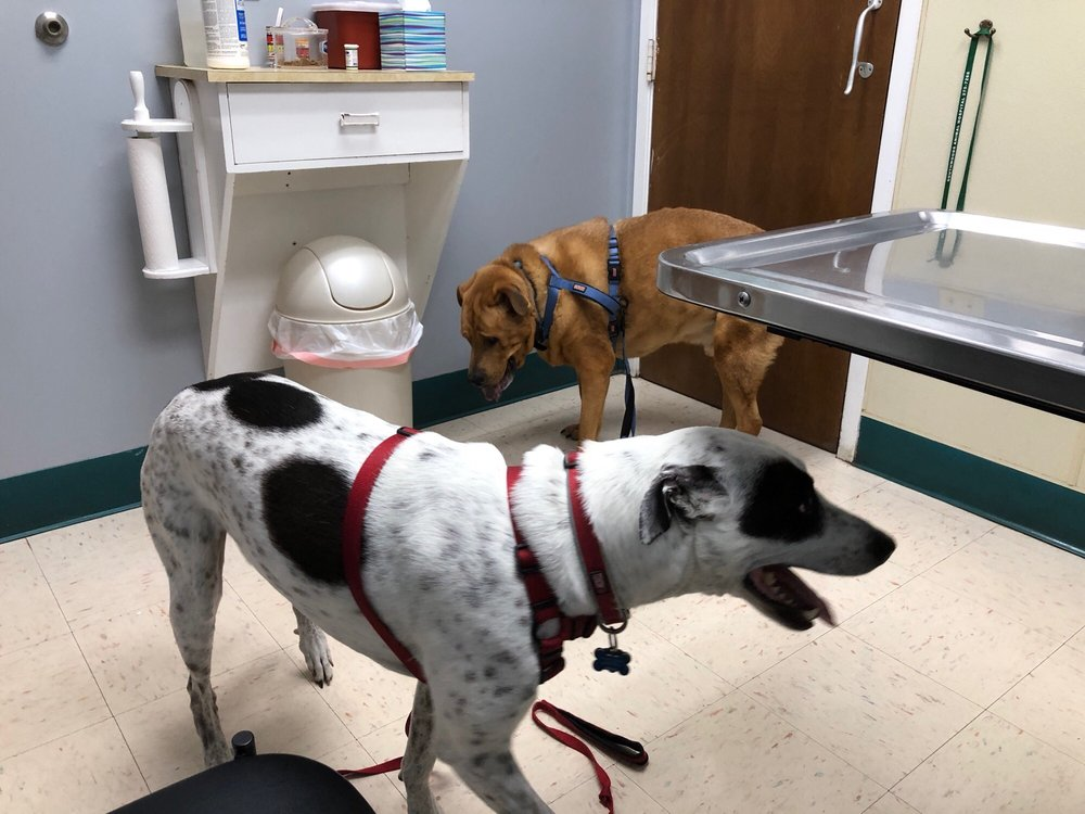 Southwoods Animal Hospital: 3005 Randleman Rd, Greensboro, NC
