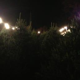 2710efd167e Photo of Dan   Bryan s Christmas Trees - Washington