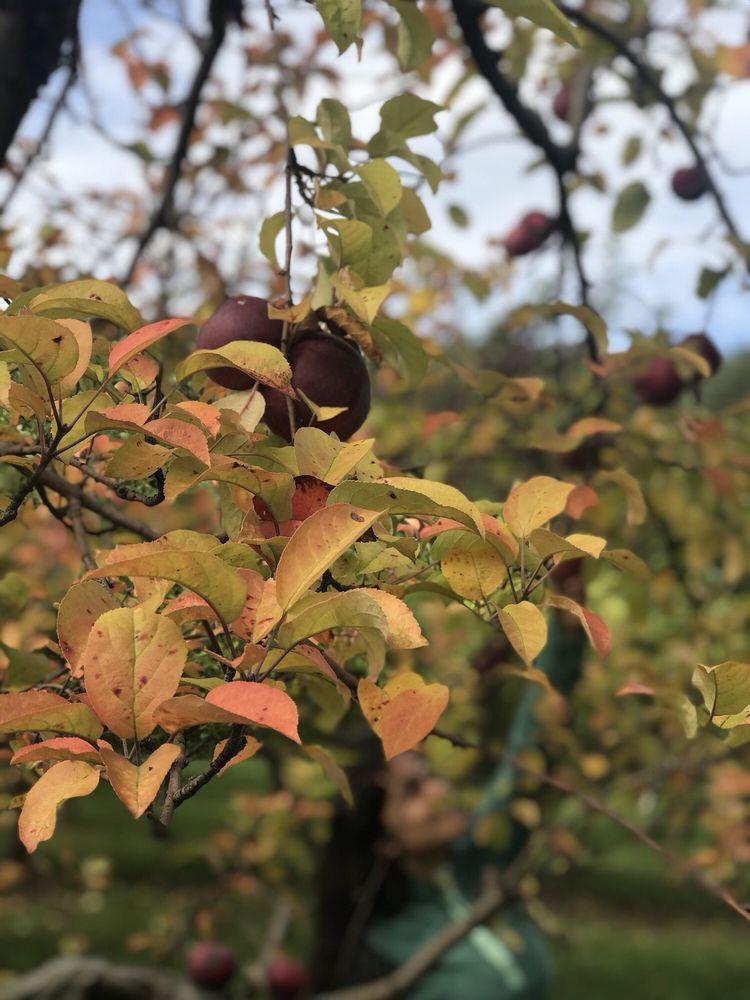 Stone Ridge Orchard: 3012 E State Rte 213, Stone Ridge, NY