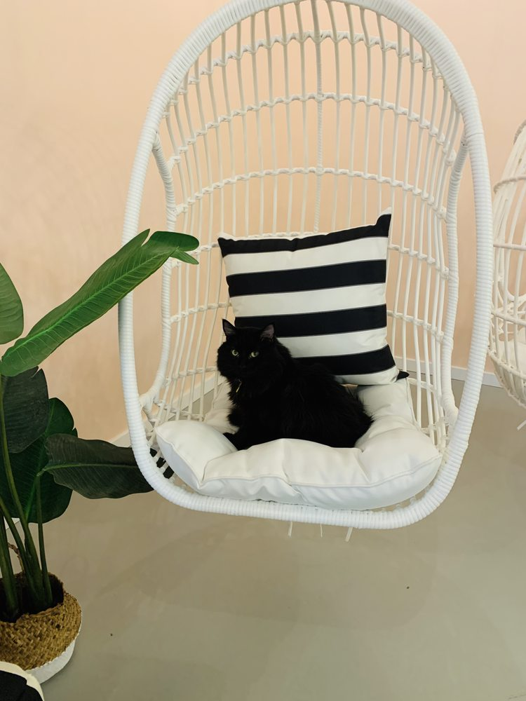 NEKO: A Cat Café: 1130 Cornwall Ave, Bellingham, WA