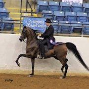 Irvine Training - CLOSED - 30 Photos - Horseback Riding