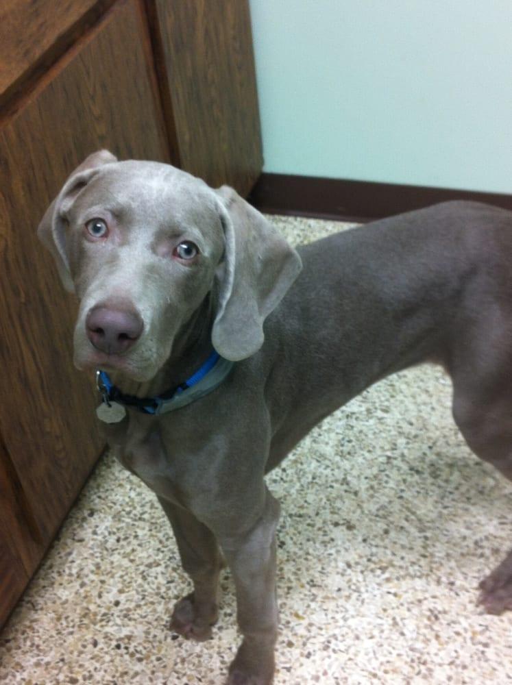 Clifton Park Veterinary Clinic: 379 Ushers Rd, Ballston Lake, NY