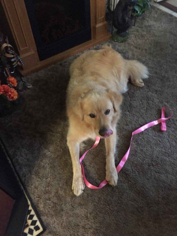 Angel Care Pet Grooming: Kerby, OR