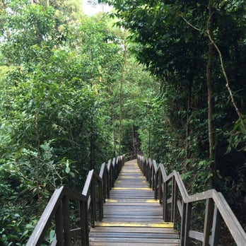 Photo of HSBC Treetop Walk - Singapore Singapore & HSBC Treetop Walk - 64 Photos u0026 11 Reviews - Hiking - MacRitchie ...