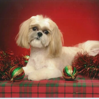 Dog Grooming West Ashley Sc