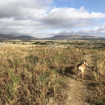 Pavlov Dog Training Denver Co