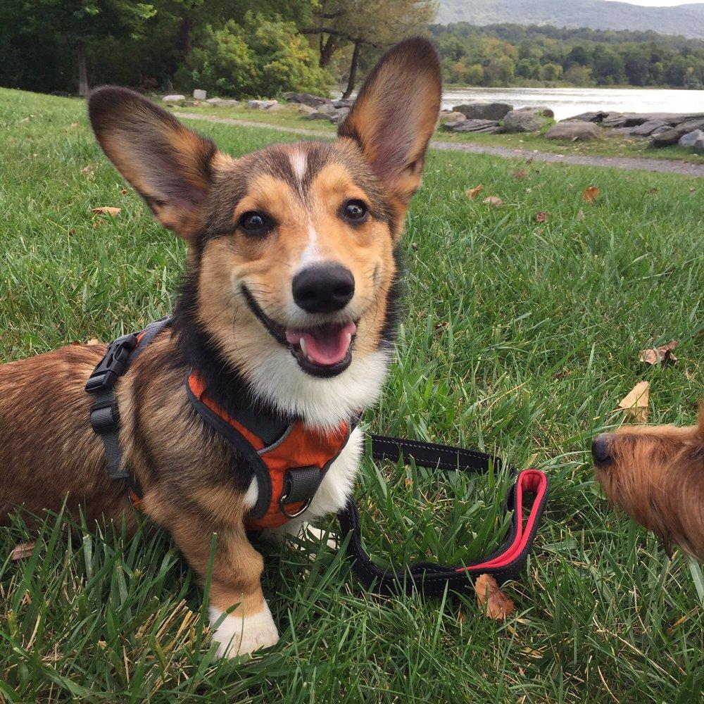 Hound Haven Dog Walking and Pet sitting: Beacon, NY
