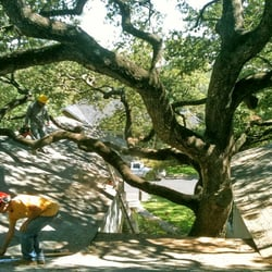 Austin beautiful trees 41 reviews tree services 2605 geraghty photo of austin beautiful trees austin tx united states scott runs only sciox Choice Image