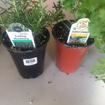 Photo Of Armstrong Garden Centers Huntington Beach Ca United States