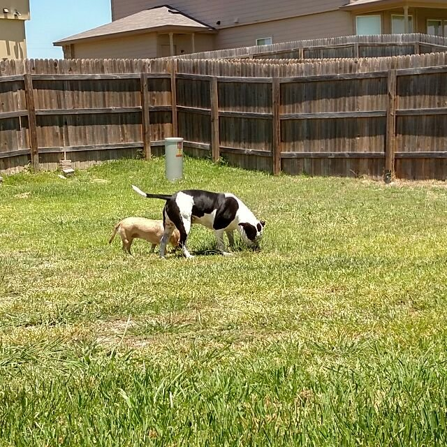 Biscuits & Bones Pet Sitting - by Jeannie: 2405 Post Oak Ave, Copperas Cove, TX