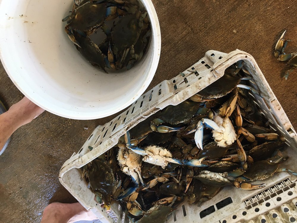 Joe's Bait & Crabs: Port Bolivar, TX