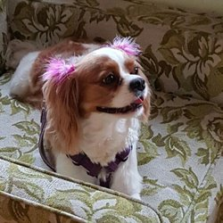 Photo Of Carroll Gardens Pet Grooming   Brooklyn, NY, United States. Pretty  Penny
