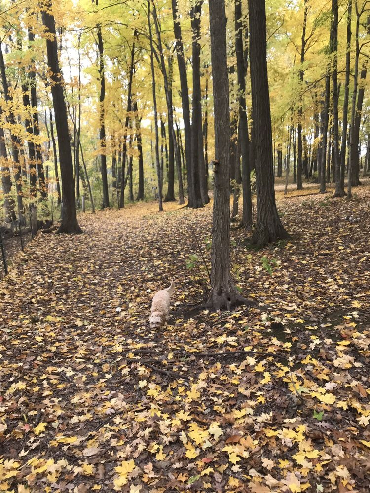 Brown County Park & Pet Exercise Area: 1000 Pleasant Ln, Green Bay, WI