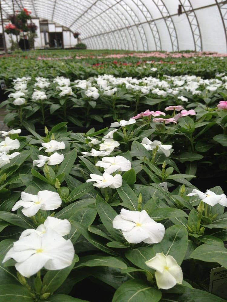 Williams Greenhouses & Nursery: 45865 Maries Rd, Sterling, VA