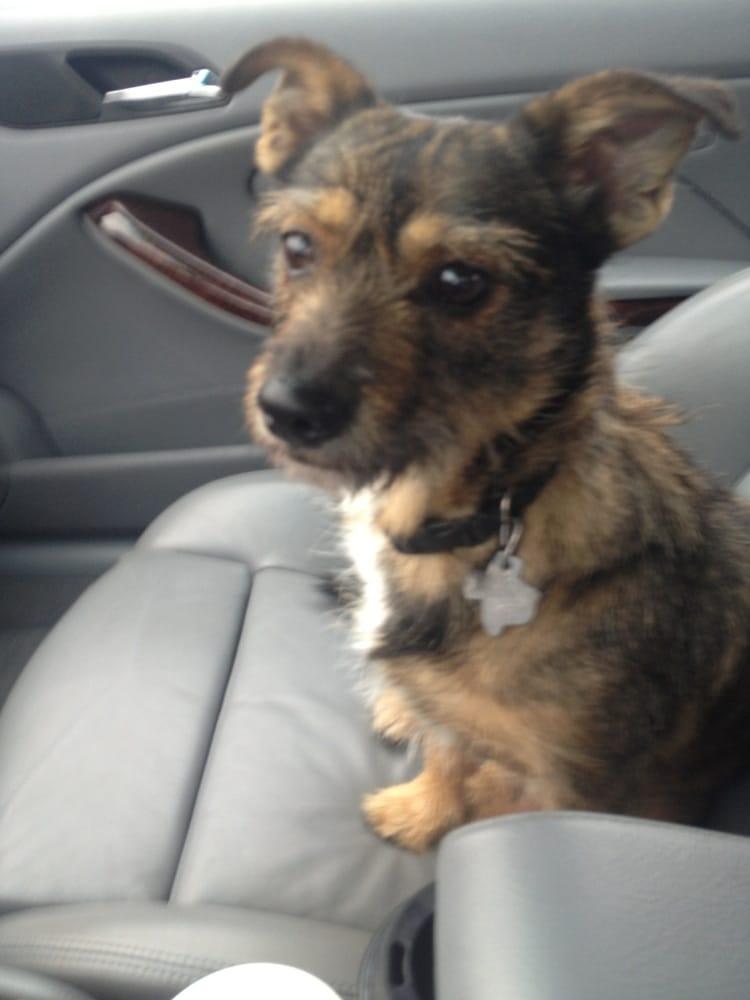 Rosebrock Veterinary Clinic: 2325 FM 967, Buda, TX