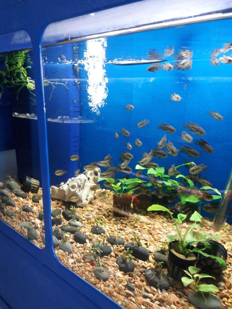B B Tropical Fish & Pet: 9226 Cypress Creek Pkwy, Houston, TX