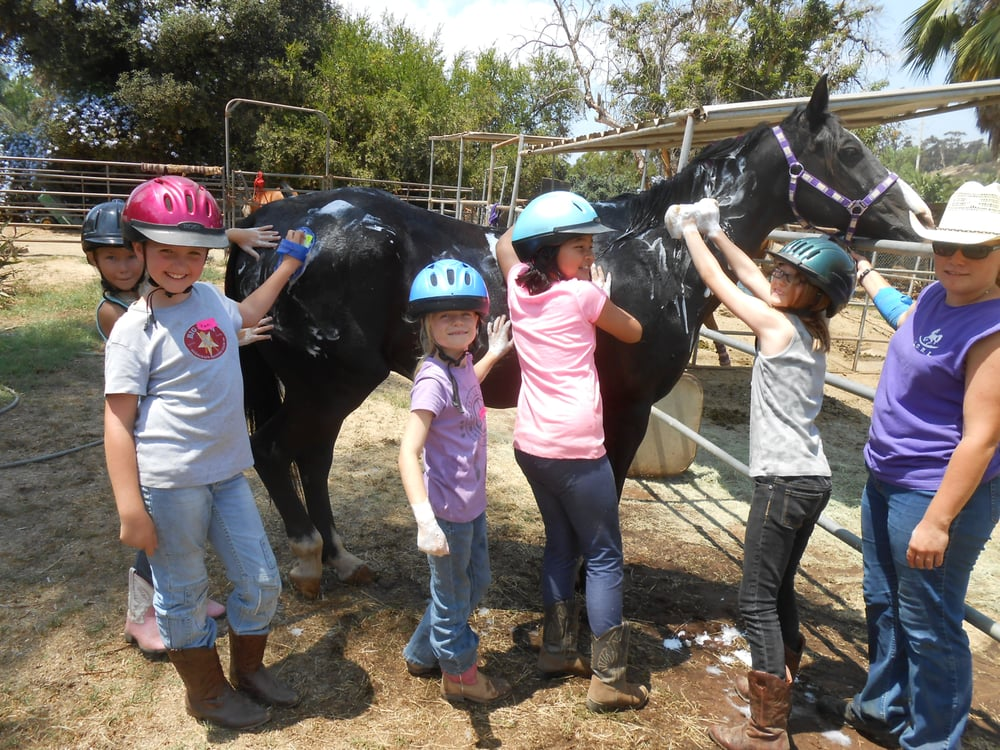 Bathing The Horses At Camp Yelp