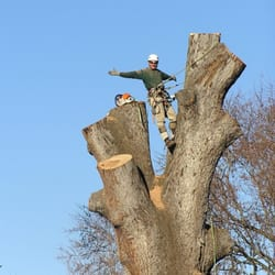 Photo Of O Tree And Lawn Service Stuarts Draft Va Large Removal Charlottesville