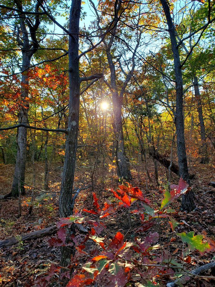 Buzzard Rock North Trail: State Rd 619, Front Royal, VA
